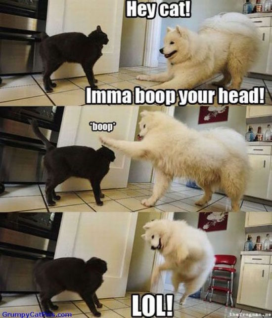 funny photo of dog boops cat
