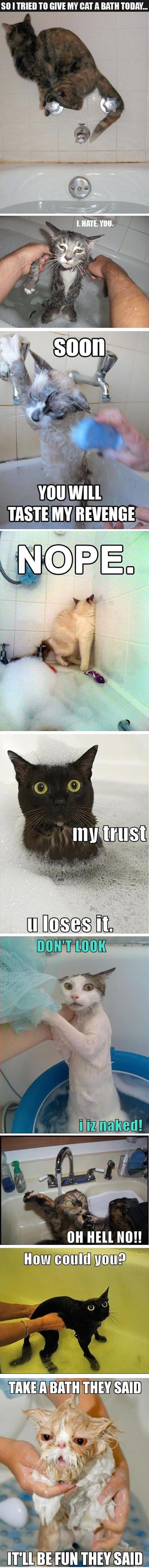 funny pictures of cats that hate baths