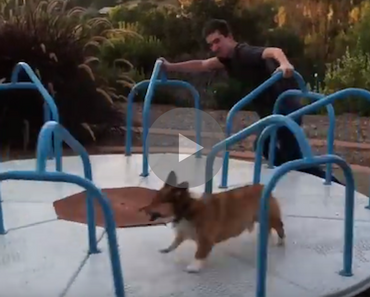 corgi on a carousel, carousel corgi, corgi carousel, funny corgi, corgi funny, funny corgi video, corgi video funny, cute corgi, smiling corgi, happy corgi, corgis, best corgi, happy dog, dog happy, funny animals, funny animal, funny animal videos, funny animal video, funny videos, funny video, funny vids, funny vid, funny dog, funny dogs, dog, dogs, best dog ever, funny dog video, funny dog videos, funny dog vid, funny dog vids, dog videos funny, dog video funny