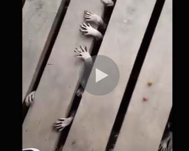 raccoons hands, raccoons under a porch, raccoons look like zombies, raccoons under the porch, raccoons under porch, funny raccoons, funny raccoon, raccoons funny, raccoon funny, raccoons eating, funny raccoons eating, best raccoon video, funny video, funny videos, funny vid, funny vids, funniest video ever, animal video, animal videos, funny animal, funny animals, funniest videos 2016, funniest videos 2017,funniest videos 2018, funniest videos 2019, funniest videos 2020, best videos 2016, best videos 2017, best videos 2018, best videos 2019, best videos 2020