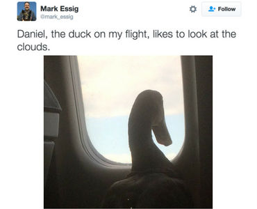 If You Sit Next To A Duck On A Plane You Sure As Hell