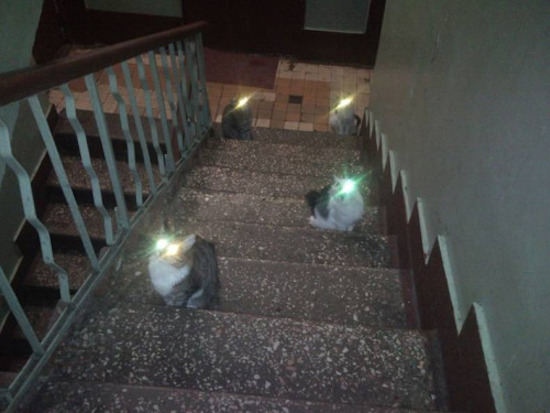 Image result for flash pic of cats