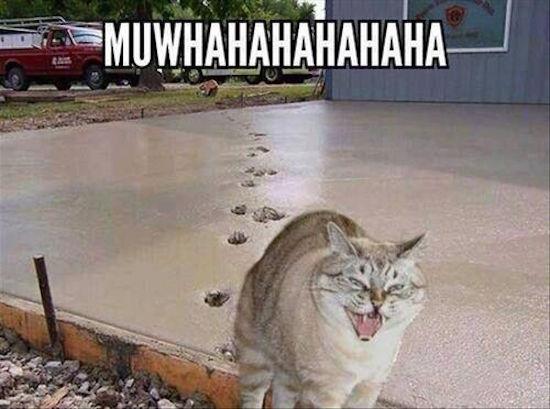 Cat Red Dot Meme