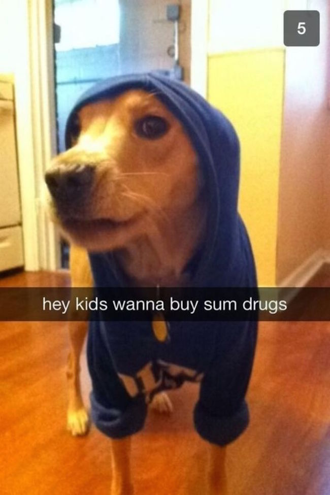 Funny Memes For Snapchat : Of the funniest dog snapchats that mastered art