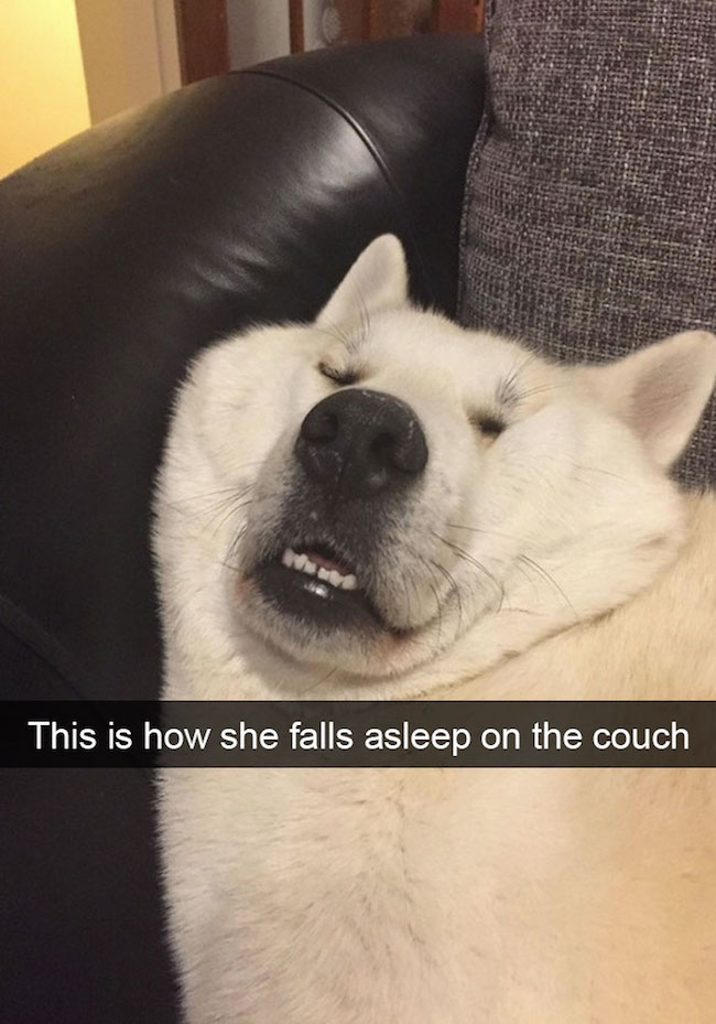 Image of: Funny Memes Funny Dog Snapchats Funny Dog Snapchat Hilarious Dog Snapchats Hilarious Dog Snapchat Ruin My Week 30 Of The Funniest Dog Snapchats That Mastered The Art Of Captioning