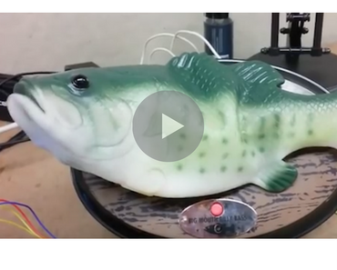 amazon echo big mouth billy bass, alexa big mouth billy bass, big mouth billy bass alexa, big mouth billy bass amazon echo, echo big mouth billy bass, big mouth billy bass echo, funny big mouth billy bass, big mouth billy bass funny, funny video, funny videos, funny vid, funny vids, funniest videos 2016, funniest videos 2017, funniest videos 2018, funniest videos 2019, funniest videos 2020