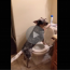 dog does the mannequin challenge, perfect mannequin challenge, dog mannequin challenge, mannequin challenge dog, dog nails mannequin challenge, dog wins mannequin challenge, mannequin challenge winner, best mannequin challenge, best mannequin challenges, mannequin challenge video, video mannequin challenge, best mannequin challenge ever, best mannequin challenge 2016, top mannequin challenge, greatest mannequin challenge, funniest mannequin challenge, funny mannequin challenge, mannequin challenge funny, funny dog, funny dogs, happy dog, dog happy, funny animals, funny animal, funny animal videos, funny animal video, funny videos, funny video, funny vids, funny vid, funny dog, funny dogs, dog, dogs, best dog ever, funny dog video, funny dog videos, funny dog vid, funny dog vids, dog videos funny, dog video funny, funniest dog videos 2016, funniest dog videos 2017, funniest dog videos 2018, funniest dog videos 2019, funniest dog videos 2020, best dog videos 2016, best dog videos 2017, best dog videos 2018, best dog videos 2019, best dog videos 2020