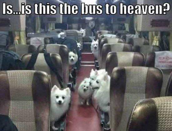 bus heaven dogs