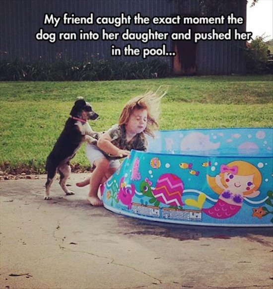 best funny pictures, funny pics, funny photos, funny pictures, funny vids, the best funny pictures, really funny photos, funny photos of animals, funny photos 2016, funny photos 2017, funny photos 2018, funny photos 2019, funny pics 2016, funny pics 2017, funny pics 2018, funny pics 2019, funny pictures 2016, funny pictures 2017, funny pictures 2018, funny pictures 2019, funniest pics 2016, funniest pics 2017, funniest pics 2018, funniest pics 2019, funniest pictures 2016, funniest pictures 2017, funniest pictures 2018, funniest pictures 2019, funniest photos 2016, funniest photos 2017, funniest photos 2018, funniest photos 2019