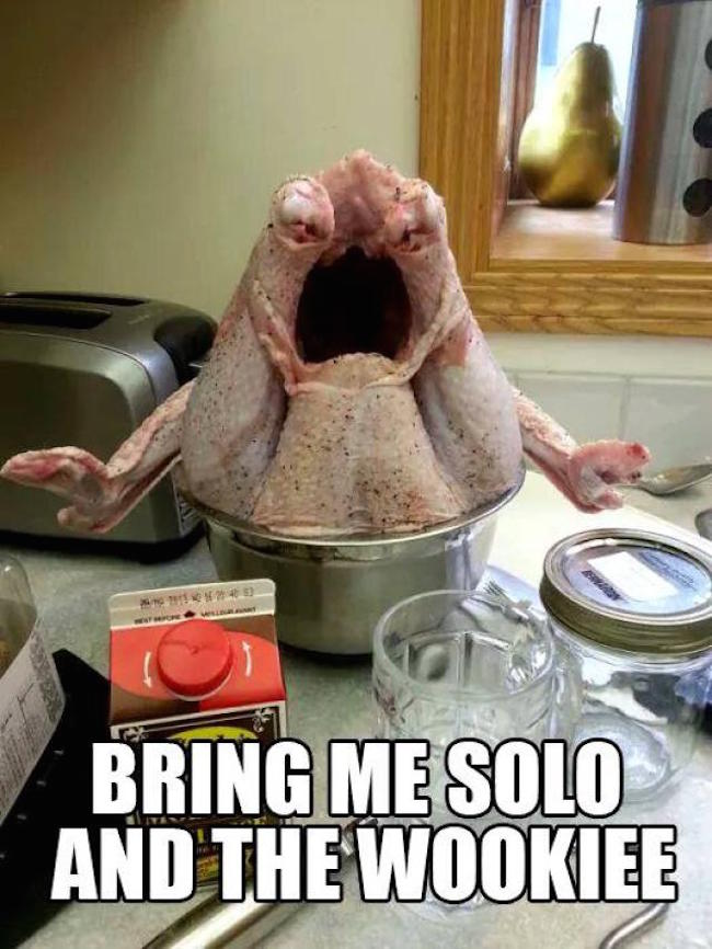 funny thanksgiving, thanksgiving funny, best funny pictures, funny pics, funny photos, funny pictures, funny vids, the best funny pictures, really funny photos, funny photos of animals, funny photos 2016, funny photos 2017, funny photos 2018, funny photos 2019, funny pics 2016, funny pics 2017, funny pics 2018, funny pics 2019, funny pictures 2016, funny pictures 2017, funny pictures 2018, funny pictures 2019, funniest pics 2016, funniest pics 2017, funniest pics 2018, funniest pics 2019, funniest pictures 2016, funniest pictures 2017, funniest pictures 2018, funniest pictures 2019, funniest photos 2016, funniest photos 2017, funniest photos 2018, funniest photos 2019