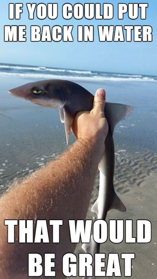 funny picture of annoyed shark