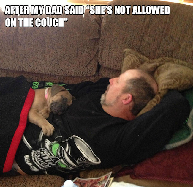 dads who didn't want dogs, dads who didnt want dogs, dads didnt want dogs, dads and dogs, dogs and dads, funny dads dogs, funny dogs dads, dads who said they didn't want dogs, dads didn't want a dog, reluctant pet parents, reluctant dog owners, reluctant dog dads, funny dog, funny dogs, dog, dogs, dogs funny, dog funny, funny pictures of dogs, funny dogs and cats, funny pics of dogs, pictures of funny dogs, funny images of dogs, dogs being funny, cute funny dogs, funny photos of dogs, funny cute dogs, dogs with funny faces, images of funny dogs, funny dogs with captions, funny pictures of cats and dogs, funny pictures dogs, funny pictures of dogs and cats, pics of funny dogs, funny pictures of dogs with captions, cute and funny dogs, funny dogs images, really funny dogs, dogs images funny, funny dogs photos, very funny dogs, dogs are funny, funny funny dogs, dogs that are funny, funny pics of dogs with captions, funny small dogs, funny big dogs, funny and cute dogs, funny pics of dogs and cats, funny pics dogs, pictures of funny looking dogs, funny pics of cats and dogs, funny looking dogs pictures, funny little dogs, funny pictures with dogs, photos of funny dogs, most funny dogs, funny dogs and puppies, funny cats and funny dogs, funny pictures about dogs, i love funny dogs, pictures of funny dogs and cats, images funny dogs, really funny pictures of dogs, pictures funny dogs, funny dads, funny photos, funny pics, funny picture, best funny pictures, funny dads, dads funny, funniest dad ever, best dad ever, best dads ever, funniest dads ever, funniest dad photos 2016, funniest dad photos 2017, funniest dad photos 2018, funniest dad photos 2019, funny fathers, fathers funny, funny parents, parents funny, funniest parents ever, best parents ever, funniest dad pictures 2016, funniest dad pictures 2017, funniest dad pictures 2018, funniest dad pictures 2019, funniest dad pictures 2020, funniest parents 2016, funniest parents 2017, funniest parents 2018, funniest parent