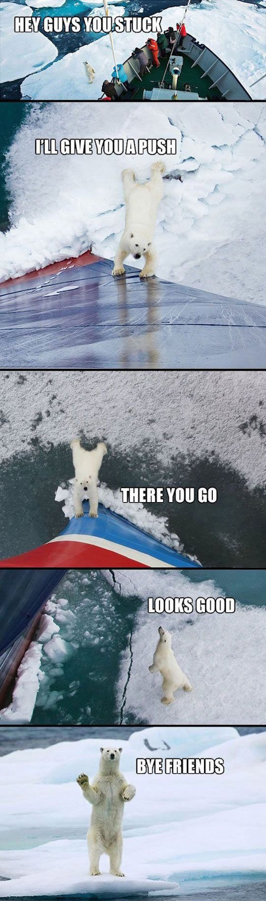 cute photos of polar bear helping a boat