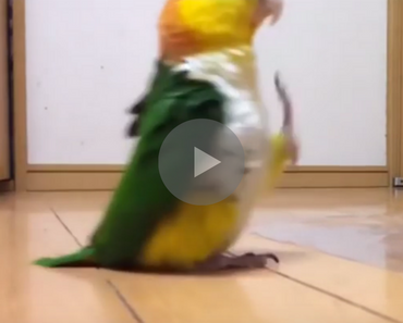 bird doing a military march, bird doing a military march reddit, reddit bird doing a military march, bird doing a military march youtube, youtube bird doing a military march, video bird doing a military march, bird doing a military march video, bird marching, marching bird, funniest bird ever, funny bird, bird funny, funny bird videos, funniest bird videos 2016, funniest bird videos 2017, funniest bird videos 2018, funniest bird videos 2019, funniest bird videos 2020, funny video, funny videos, funny vid, funny vids, funniest video ever, animal video, animal videos, funny animal, funny animals
