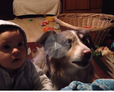 dog says mama, dog speaks, dog says mama for food, dog wants food, dog saying mama, speak dog, funny dog, funny dogs, happy dog, dog happy, funny animals, funny animal, funny animal videos, funny animal video, funny videos, funny video, funny vids, funny vid, funny dog, funny dogs, dog, dogs, best dog ever, funny dog video, funny dog videos, funny dog vid, funny dog vids, dog videos funny, dog video funny, funniest dog videos 2016, funniest dog videos 2017, funniest dog videos 2018, funniest dog videos 2019, funniest dog videos 2020, best dog videos 2016, best dog videos 2017, best dog videos 2018, best dog videos 2019, best dog videos 2020