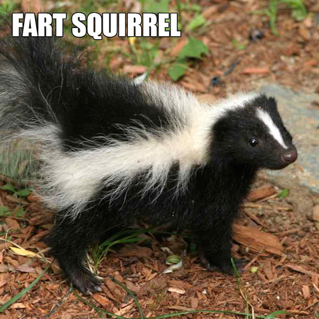 40 Most Funniest Fart Memes That Will Make You Laugh Hard   Animal Fart Memes