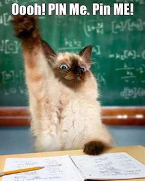 funny pic of pin me cat