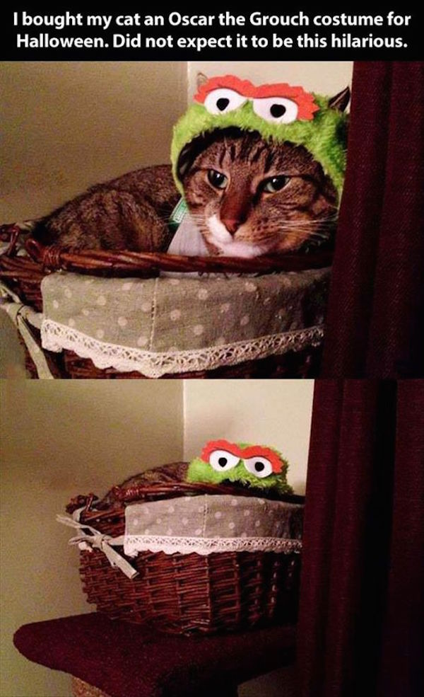 cute photo of a cat in oscar the grouch costume