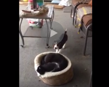 puppy scares cat, beagle puppy scares cat, funny puppy, puppy funny, funny beagle, beagle funny, funniest puppy ever, funniest puppies ever, funniest puppy videos 2016, funniest puppy videos 2017, funniest puppy videos 2018, funniest puppy videos 2019, funniest puppy videos 2020, dog scares cat, cat scared of dog, dog scares cats, dog accidentally scares cats, dog scaring cats, dog vs cats, cats vs dog, dog versus cats, cats versus dogs, new dog scares cats, my dog scares my cat, dog cat cute, funny cat and dog videos, funny dog and cat fight video, funny dog and cat videos youtube, funny dog and cat vines, animal fail, animal fails, funny animal fails, epic animal fails, best animal fails, funny animal fails videos, animal epic fails, animal jumping fails, ultimate animal fails, cute animal fails, hilarious animal fails, animal fails 2015, animal fails 2014, animal fails 2016, animal fails 2017, animal fails 2018, animal fails 2019, animal fails vines, animal fails compilation 2016, animal fails compilation 2015, animal fails compilation 2017, animal fails clean, animal fails reddit, animal fails try not to laugh, animal fails buzzfeed, top 10 animal fails, cat fails, dog fails, try not to laugh, fail, fails, fail video, fail videos, fails video, fails videos, funny fails videos, epic fails videos, epic fails 2013, epic fails pictures, funny fails, best epic fails, funny epic fails, funny videos fails, fails funny, internet fails, funny epic fails videos, fails epic, epick fails, movie fails, website fails, epic funny fails, fails funny videos, funny videos and fails, funnies and fails, hilarious fails, funniest fails ever, ultimate fails, top fails, epic fails funny, the best epic fails, biggest fails, best internet fails, very funny fails, funny and fails, really funny fails, appropriate epic fails, best epic fails ever, funny funny fails, funniest fails in the world, worlds funniest epic fails, epic fails funny videos, funnyest fails, most funny fails, videos of