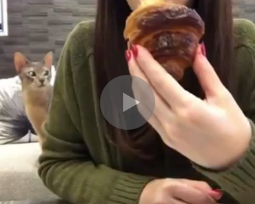 cat really wants croissant, cat wants croissant, cat croissant, croissant cat, cat really wants breakfast, breakfast cat, cat tries to get croissant, cat trying to get croissant, funny cat croissant, cat croissant funny, annoying cat, cat annoying, funny cat, funny cats, funny cat video, funny cat videos, cats funny, funny cats, funny video, funny videos, funny vid, funny vids, funniest video ever, animal video, animal videos, funny animal, funny animals, funniest cat videos 2016, funniest cat videos 2017, funniest cat videos 2018, funniest cat videos 2019, funniest cat videos 2020, funniest cats 2016, funniest cats 2017, funniest cats 2018, funniest cats 2019, funniest cats 2020, funniest kitten videos 2016, funniest kitten videos 2017, funniest kitten videos 2018, funniest kitten videos 2019, funniest kitten videos 2020