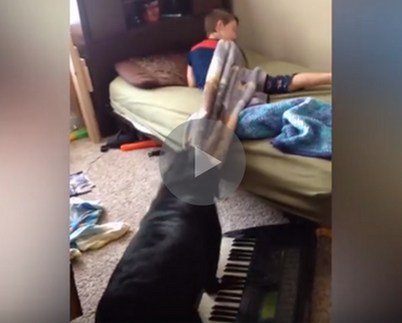 dog gets kid out of bed, dog pulls bed covers, dog pulls bed covers off, dog bed covers, bed covers dog, dog pulls sheets off, dog alarm clock, alarm clock dog, dog better than alarm clock, funny dog, funny dogs, happy dog, dog happy, funny animals, funny animal, funny animal videos, funny animal video, funny videos, funny video, funny vids, funny vid, funny dog, funny dogs, dog, dogs, best dog ever, funny dog video, funny dog videos, funny dog vid, funny dog vids, dog videos funny, dog video funny, funniest dog videos 2016, funniest dog videos 2017, funniest dog videos 2018, funniest dog videos 2019, funniest dog videos 2020, best dog videos 2016, best dog videos 2017, best dog videos 2018, best dog videos 2019, best dog videos 2020