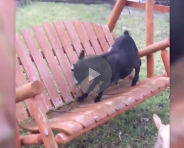 goat falls off porch swing, goat falls off a porch swing, goat fail, goat fails, goat porch swing, porch swing goat, ahhh ricky it's ok, ricky the goat, funny goat, goat funny, funny goats, goats funny, goat falls, goats falling, funniest goat ever, funniest goat videos 2016, funniest goat videos 2017, funniest goat videos 2018, funniest goat videos 2019, funniest goat videos 2020, best goat videos 2016, best goat videos 2017, best goat videos 2018, best goat videos 2019, best goat videos 2020, funny fall, funny fail, funny fails, funny video, funny videos, funny vid, funny vids, funniest videos 2016, funniest videos 2017, funniest videos 2018, funniest videos 2019, funniest videos 2015, funniest videos 2020, funny goat, goat funny, cute goat, goat cute, funny goat video, funny goat videos, funny animals, funny animal, funny animal videos, funny animal video,