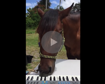 horse playing piano, horse playing a piano, piano horse, horse piano, horse playing piano with mouth, horse piano video, video horse piano, funny horse, horse funny, funny horse video, funny horse videos, funny video, funny videos, funny vid, funny vids, animal video, animal videos, animal vids, animal vid, funniest horse video ever, best horse video ever, funniest horse videos 2016, funniest horse videos 2017, funniest horse videos 2018, funniest horse videos 2019, funniest horse videos 2020, funny video, funny videos, funny vid, funny vids, funniest video ever, animal video, animal videos, funny animal, funny animals,