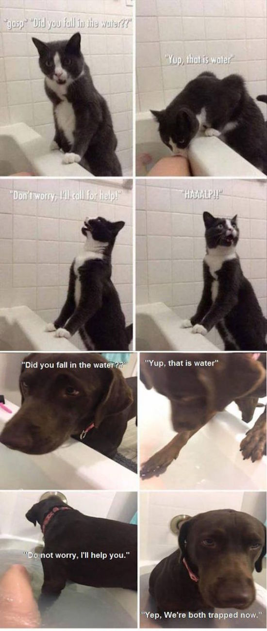 funny picture of cat in bath vs dog in bath