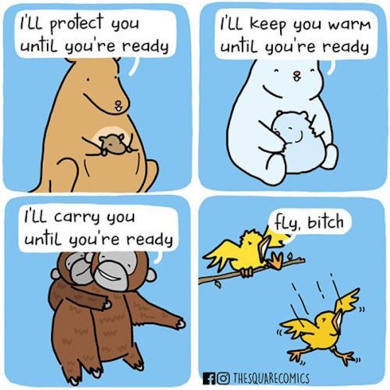 funny image of comic by thesquarecomics of bird saying fly bitch
