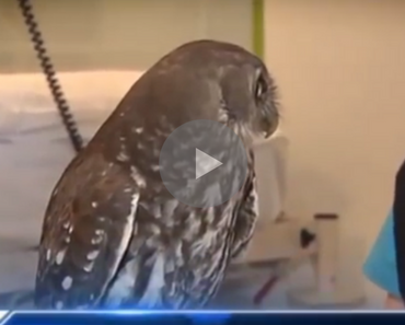 calm owl, nelly the calm owl, nelly the owl, owl calm, funny owl, owl funny, owl eyes, funny owl eyes, owl reaction, funny owl reaction, owl reacts funny, funny owl videos, funny owl video, funniest owl video, best owl video, funniest owl video ever, best owl video ever, funniest owl videos 2016, funniest owl videos 2017, funniest owl videos 2018, funniest owl videos 2019, funniest owl videos 2020, best owl videos 2016, best owl videos 2017, best owl videos 2018, best owl videos 2019, best owl videos 2020, funniest bird ever, funny bird, bird funny, funny bird videos, funniest bird videos 2016, funniest bird videos 2017, funniest bird videos 2018, funniest bird videos 2019, funniest bird videos 2020, funny video, funny videos, funny vid, funny vids, funniest video ever, animal video, animal videos, funny animal, funny animals