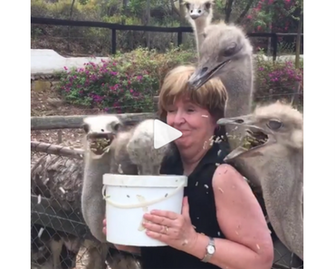 woman feeding ostriches, ostriches feeding, woman with ostriches feeding, woman feeding ostriches, funny ostriches, ostriches funny, funny bird, funny birds, funniest bird ever, funny bird, bird funny, funny bird videos, funniest bird videos 2016, funniest bird videos 2017, funniest bird videos 2018, funniest bird videos 2019, funniest bird videos 2020, funny video, funny videos, funny vid, funny vids, funniest video ever, animal video, animal videos, funny animal, funny animals, funny videos, videos funny, funny vids, vids funny, funny video, video funny, funny vid, vid funny, funniest videos 2016, funniest videos 2017,funniest videos 2018, funniest videos 2019, funniest videos 2020, best videos 2016, best videos 2017, best videos 2018, best videos 2019, best videos 2020