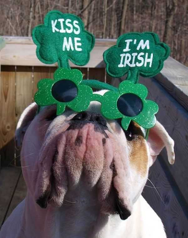 The Best Funny Pictures Of Todays Internet St Patricks Day Edition
