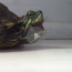 turtle sneeze, turtle sneeze, what does a turtle sneeze sound like, sneezing turtle, turtle sneezes, funny turtle, turtle funny, funniest turtle, funniest turtle ever, cute turtle, cutest turtle, cutest turtle ever, best turtle video, best turtle videos, funny turtle videos, funniest turtle videos, funniest turtle videos 2016, funniest turtle videos 2017, funniest turtle videos 2018, funniest turtle videos 2019, funniest turtle videos 2020, funny video, funny videos, funny vid, funny vids, funniest video ever, animal video, animal videos, funny animal, funny animals