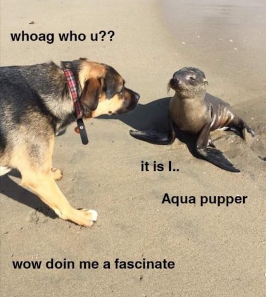 Get Aqua Dog