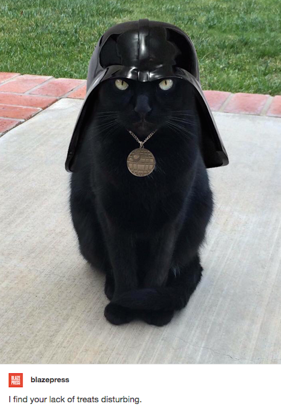 funny pictures for instagram of cat dressed like darth vader