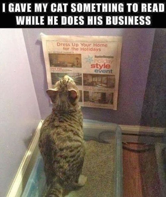 funny pictures for facebook of cat reading newspaper while in litter box