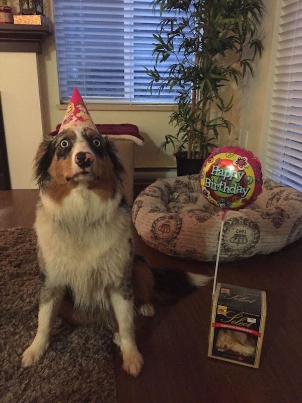funny picture of dog afraid of its own birthday