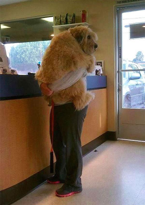 funny picture of dog hugging owner at vet