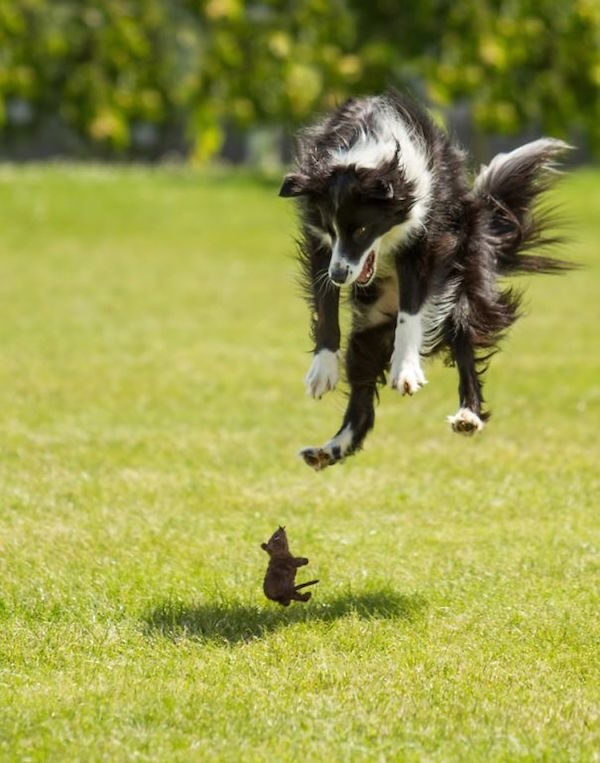funny picture of mouse making dog jump