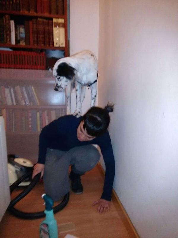 funny pic of dog hiding from vacuum on owner's back
