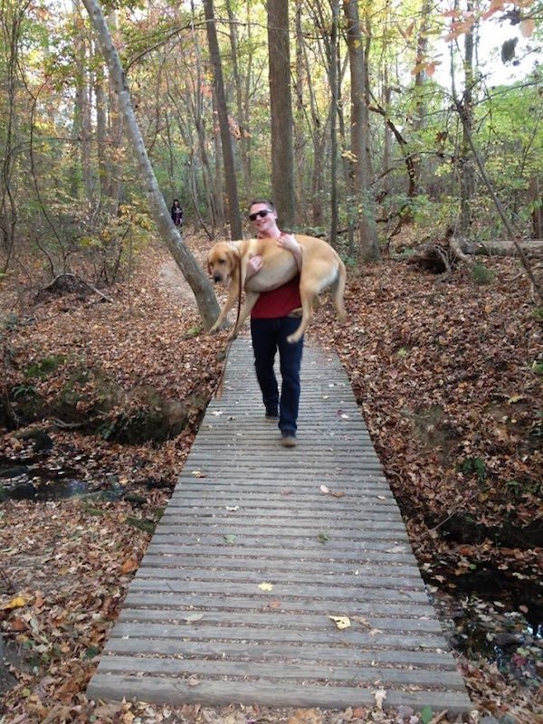 funny pic of carrying dog across a bridge