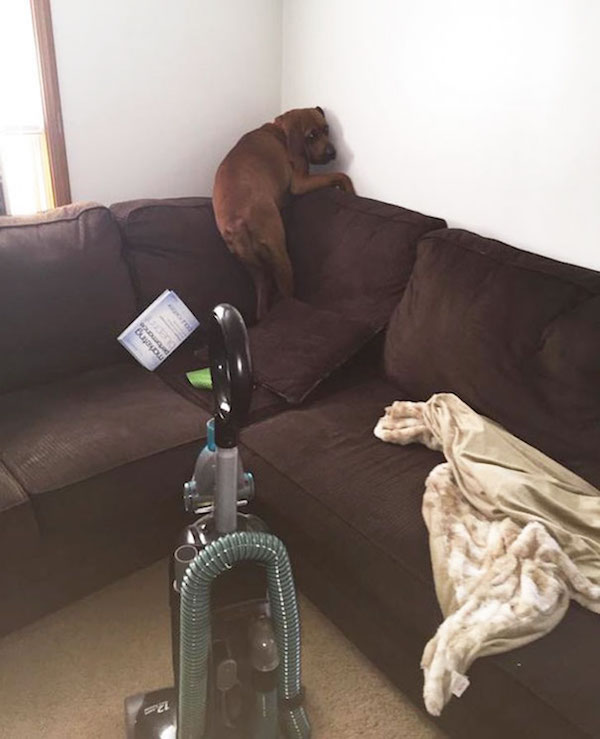 funny photo of dog scared of vacuum