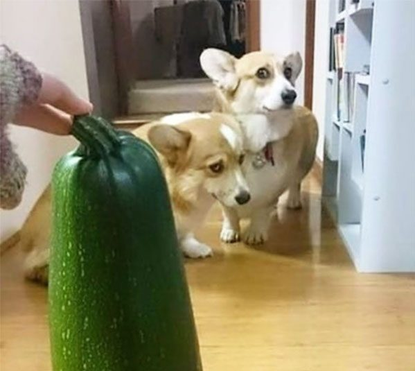 Here S Proof That Scaredy Dogs Are Funnier Than Scaredy Cats
