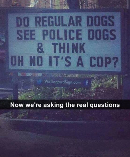funny picture of sign about regular dogs and police dogs