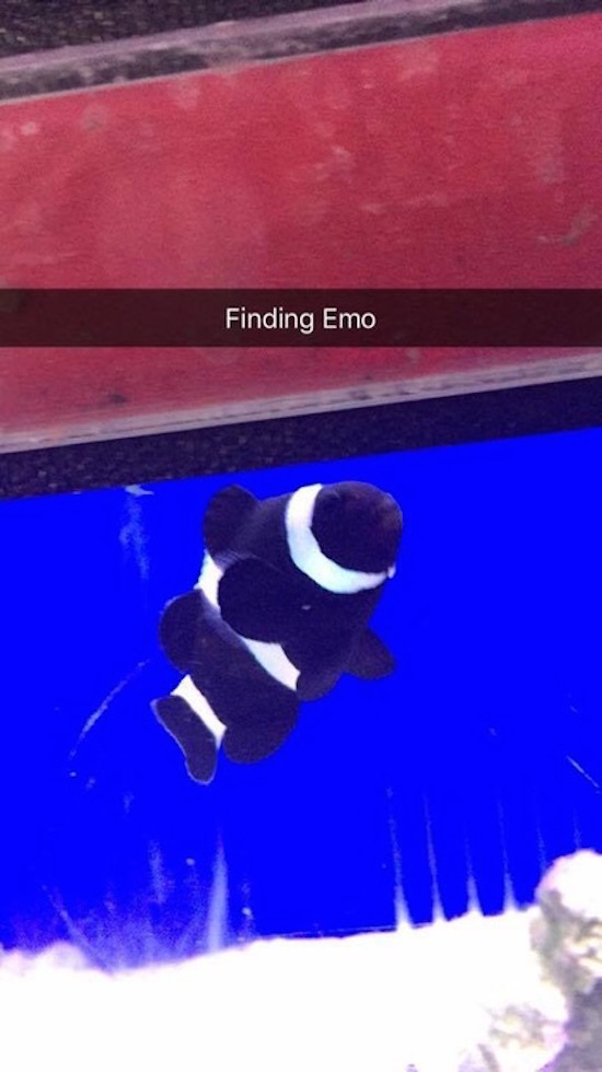 funny picture of finding emo