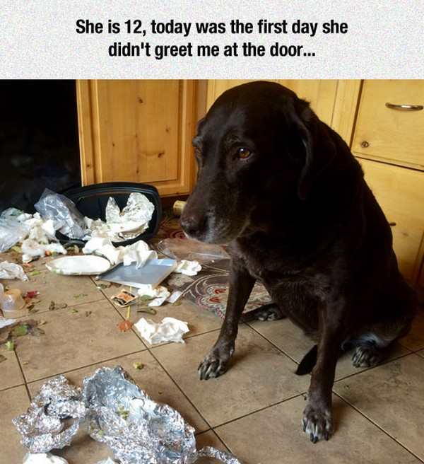 funny picture of guilty dog