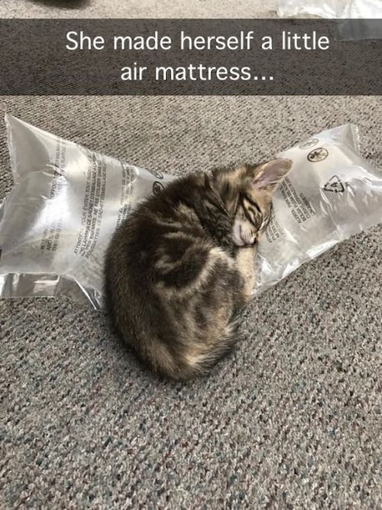 funny picture of kitten asleeo on mail packaging