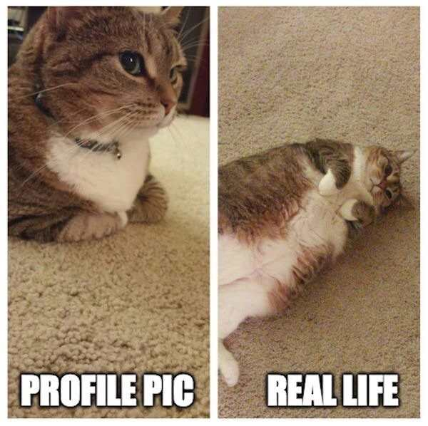funny picture of profile pic vs real life cat