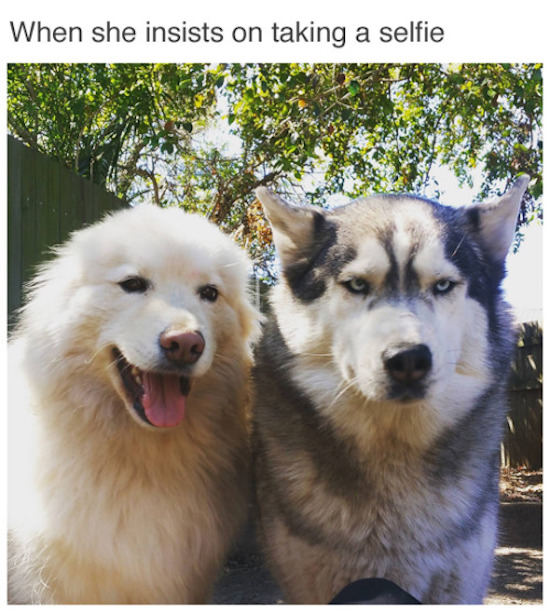 funny image of when she insist on taking a selfie dogs