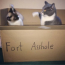 funny picture of two cats in a box labeled fort asshole